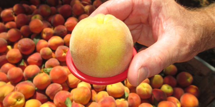National Peach Month!