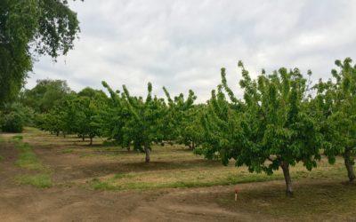 Messick Farm