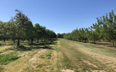 Mendez River Ranch